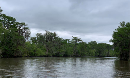 Birding in the New Orleans Bayou