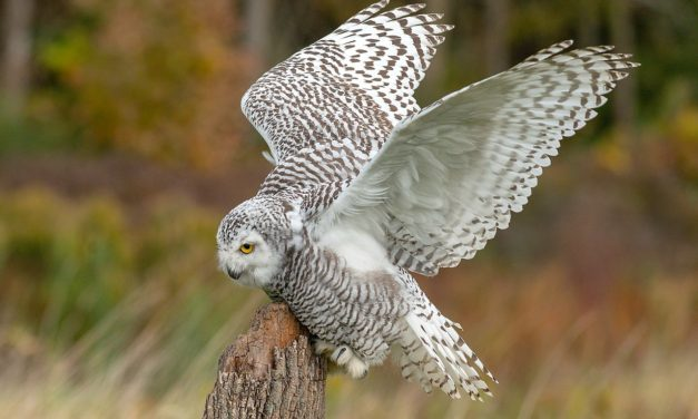 QUIZ: What Kind of Owl Are You