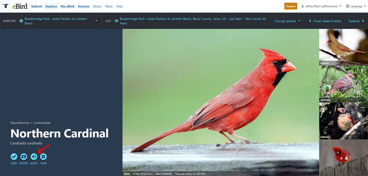 ebird species page of the northern cardinal