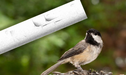 Visualize bird songs with spectrograms