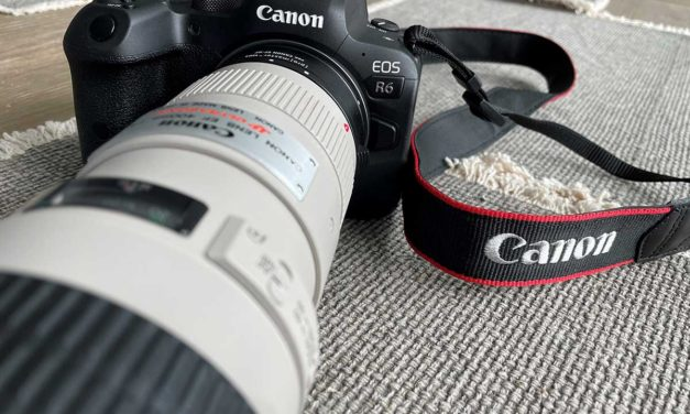 Learning to photograph birds on Manual with Canon R6