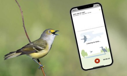 Identify bird songs using your phone with Merlin